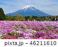 富士山 芝桜 花の写真 46211610