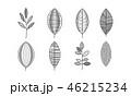 リーフ モノクロ 白黒のイラスト 46215234