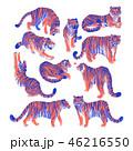 タイガー トラ 虎のイラスト 46216550