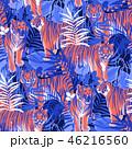 タイガー トラ 虎のイラスト 46216560