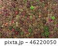 さぼてん サボテン 仙人掌の写真 46220050
