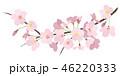 桜 春 花のイラスト 46220333