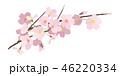 桜 春 花のイラスト 46220334