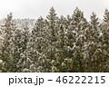 ウィンター ウインター 冬の写真 46222215