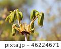 春 泉 ばねの写真 46224671