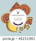 クリスマス シトラス 柑橘のイラスト 46231981