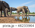 アフリカゾウ 46233964