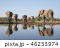 アフリカゾウ 46233974