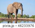 アフリカゾウ 46233976