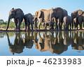 アフリカゾウ 46233983