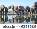 アフリカゾウ 46233986