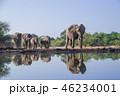アフリカゾウ 46234001