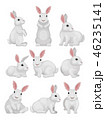うさぎ ウサギ 兎のイラスト 46235141