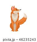 きつね キツネ 狐のイラスト 46235243