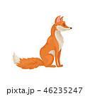 きつね キツネ 狐のイラスト 46235247