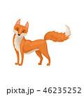 きつね キツネ 狐のイラスト 46235252