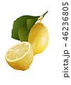 レモン01 46236805