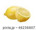 レモン02 46236807