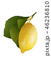 レモン04 46236810