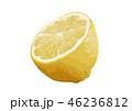 レモン05 46236812