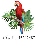 Illustration polygonal drawing  green wing macaw. 46242487