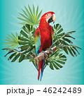 鳥 エキゾチック エキゾティックのイラスト 46242489