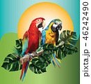 Illustration polygonal drawing of two macaw birds. 46242490
