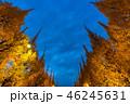 《東京都》イチョウ並木のライトアップ・神宮外苑 46245631