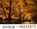《東京都》イチョウ並木のライトアップ・神宮外苑 46245673