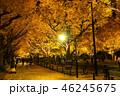 《東京都》イチョウ並木のライトアップ・神宮外苑 46245675