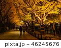 《東京都》イチョウ並木のライトアップ・神宮外苑 46245676