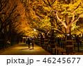 《東京都》イチョウ並木のライトアップ・神宮外苑 46245677