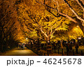 《東京都》イチョウ並木のライトアップ・神宮外苑 46245678
