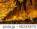 《東京都》イチョウ並木のライトアップ・神宮外苑 46245679