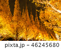 《東京都》イチョウ並木のライトアップ・神宮外苑 46245680