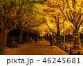 《東京都》イチョウ並木のライトアップ・神宮外苑 46245681
