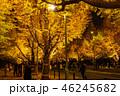 《東京都》イチョウ並木のライトアップ・神宮外苑 46245682