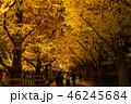 《東京都》イチョウ並木のライトアップ・神宮外苑 46245684