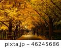 《東京都》イチョウ並木のライトアップ・神宮外苑 46245686
