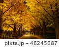 《東京都》イチョウ並木のライトアップ・神宮外苑 46245687
