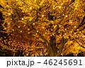 《東京都》イチョウ並木のライトアップ・神宮外苑 46245691