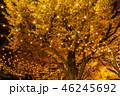 《東京都》イチョウ並木のライトアップ・神宮外苑 46245692