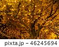 《東京都》イチョウ並木のライトアップ・神宮外苑 46245694