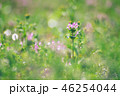 ホトケノザ 野草 花の写真 46254044