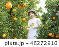 デコポン収穫 シニア女性 手に持つ 46272916