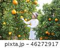 デコポン収穫 シニア女性 見定める 46272917
