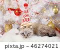 ねこ ネコ 猫の写真 46274021