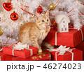 ねこ ネコ 猫の写真 46274023