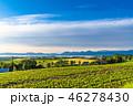 夏 田園風景 畑の写真 46278430