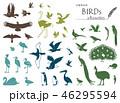 鳥のシルエット素材集 46295594